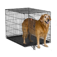 Midwest Pets 1542 42 Inch Crate Dog Training