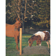 Keystone Wire 70310 Square Deal 12 1/2 Ga2 By 4 By 48 Inch 100 Foot Horse Fence