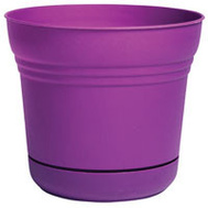Bloem SP0529 Planter 5In Saturn Passionfrut