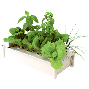 Hydrofarm GCSB Salad Box Kit